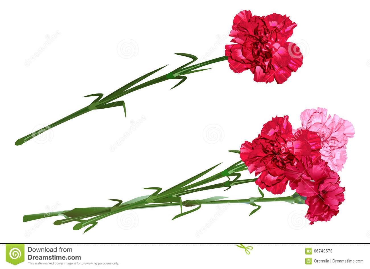 Red Clove. Bouquet Of Carnations. Set Carnation Flowers Stock Vector ...
