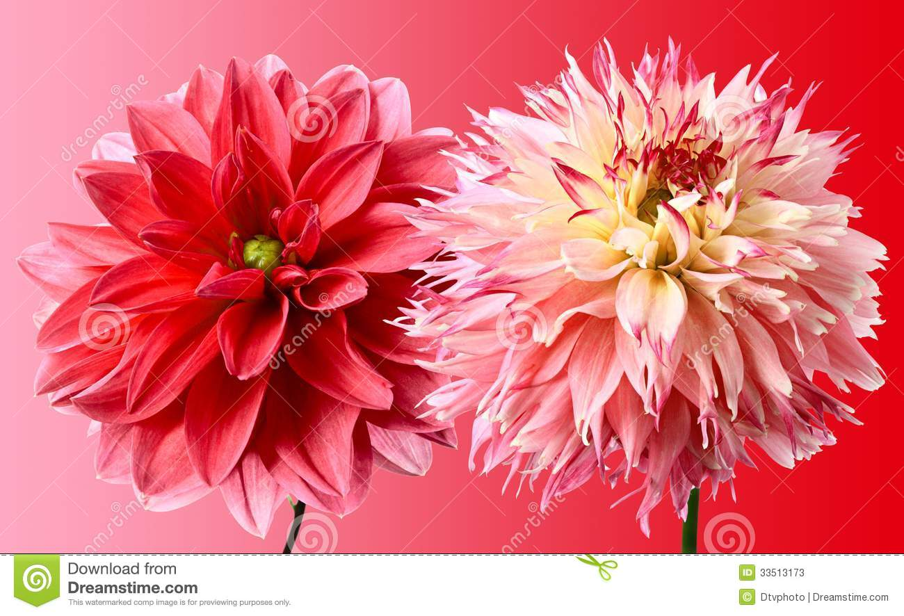 Red color stock photos image 33513173 - Dreaming about the color red ...