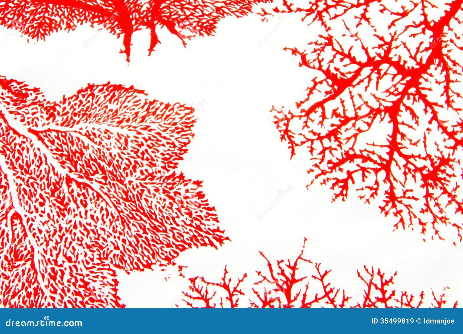 stoff korallenmotiv