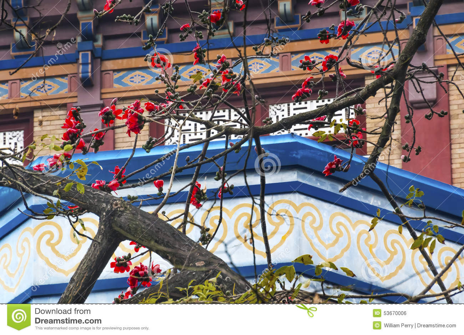 Red Cotton Flower Guangzhou City China