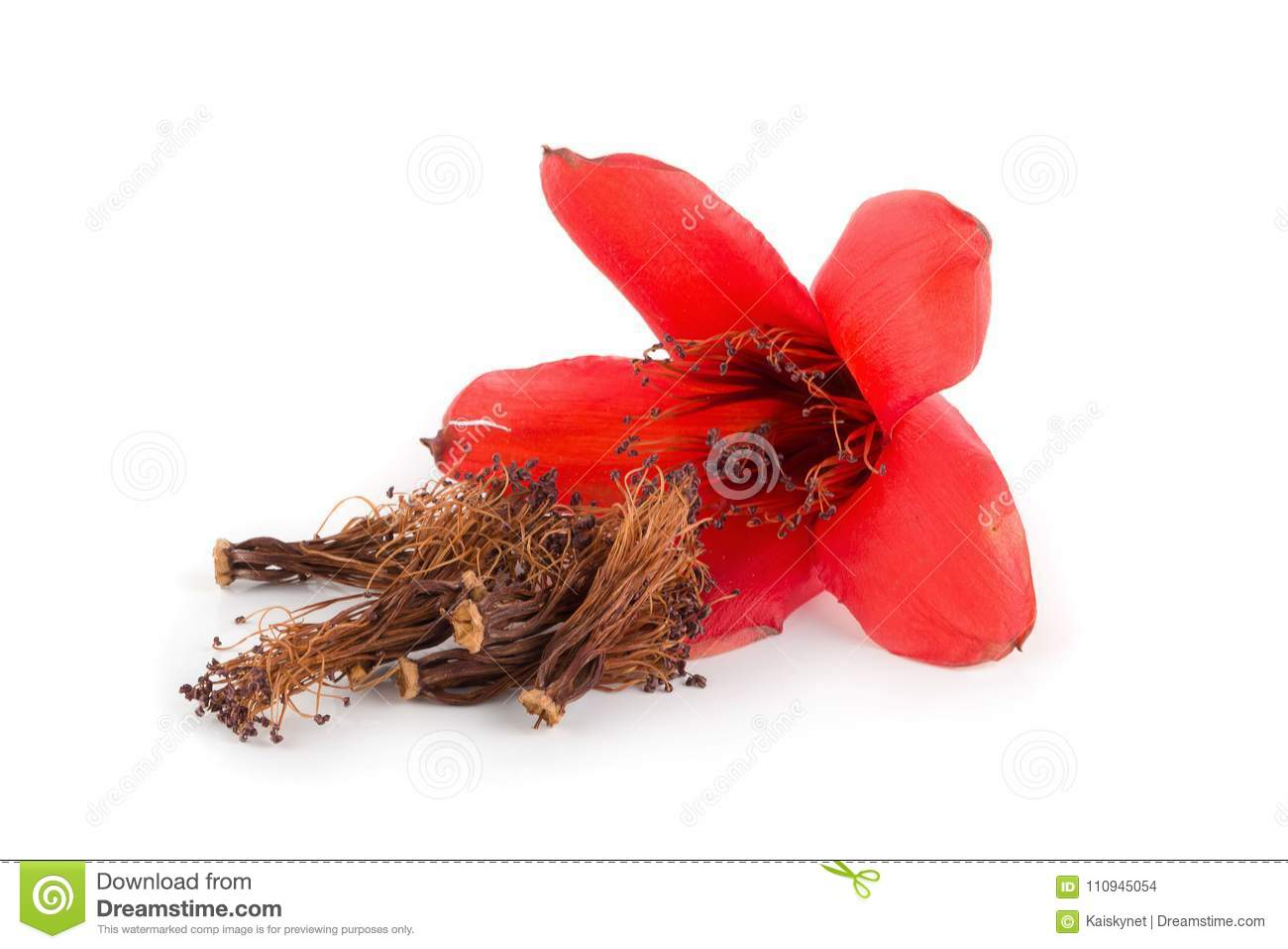 Red cotton tree flowers on white background bombax ceiba flower red cotton tree flowers on white background bombax ceiba flower is a kind of traditional chinese medicine mightylinksfo
