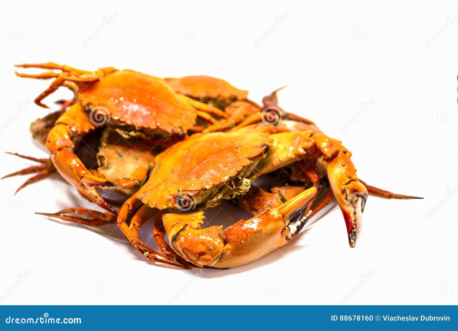 Red Crab Studio Photo For Restaurant Menu Or Cooking Recipe Book