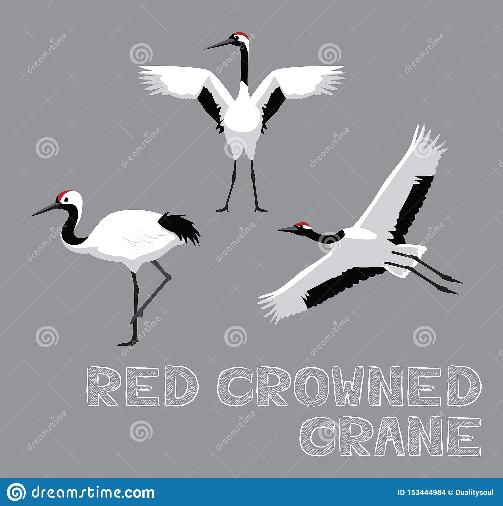 Red Crowned Crane Cartoon Vector Illustration Stock Vector Illustration Of Pose Species 153444984 Red crowned crane simple vector icon. https www dreamstime com red crowned crane cartoon vector illustration animal eps file format image153444984