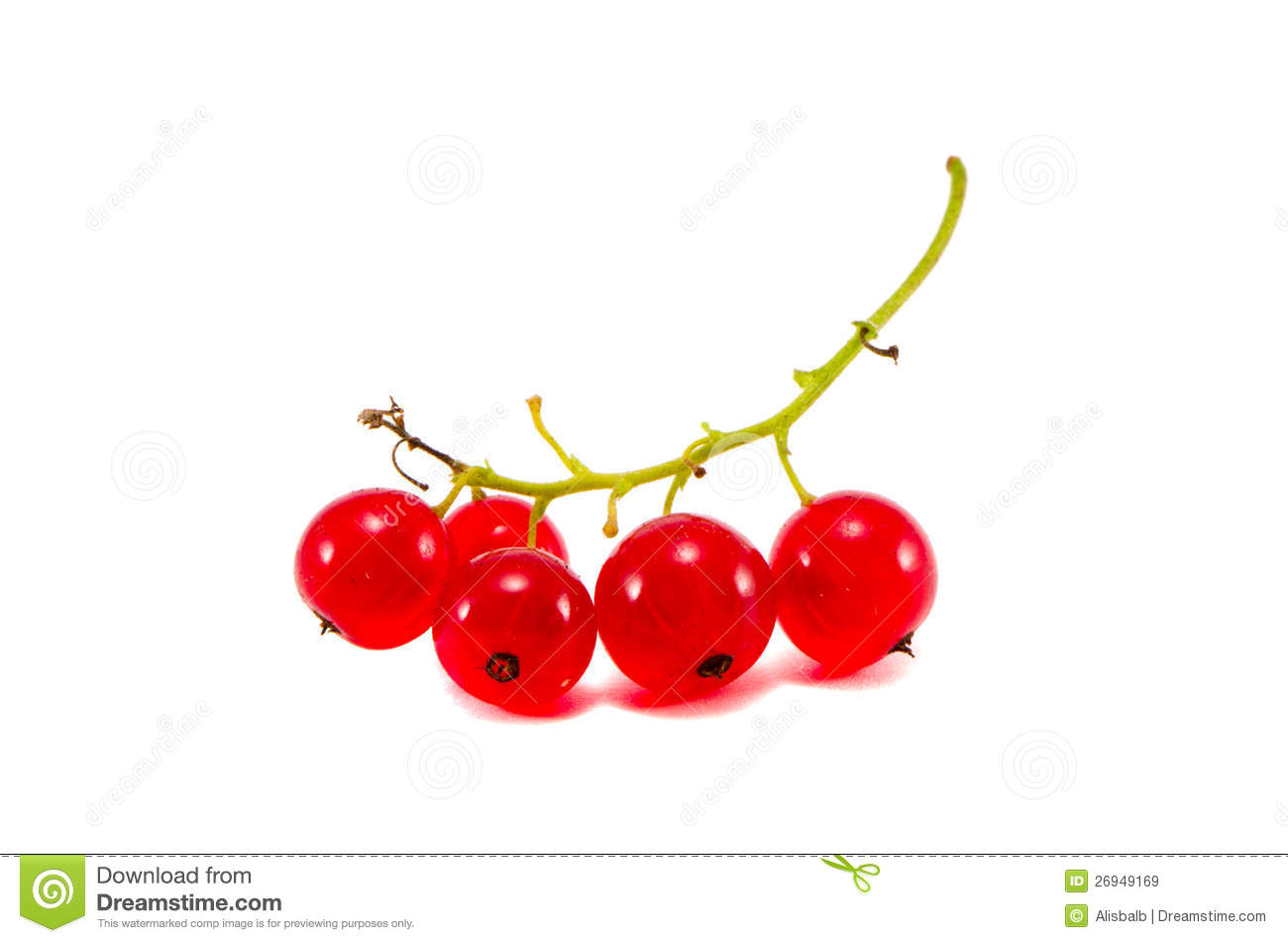 Red Currant Berry Cluster Isolated On White Stock Image ...