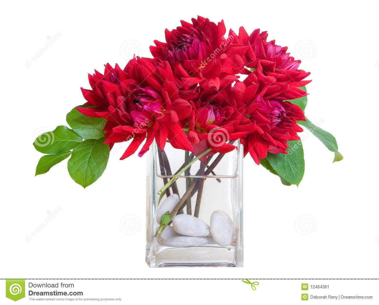 Red dahlia flowers in vase with river rocks wh stock image red dahlia flowers in vase with river rocks wh reviewsmspy