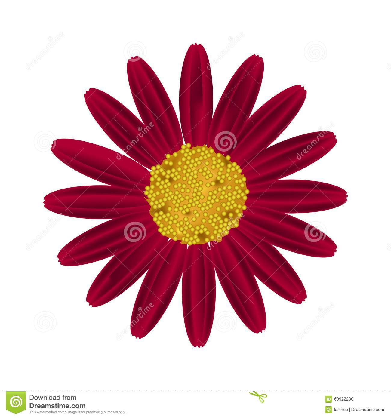 Red Daisy Flower On A White Background Stock Vector Illustration