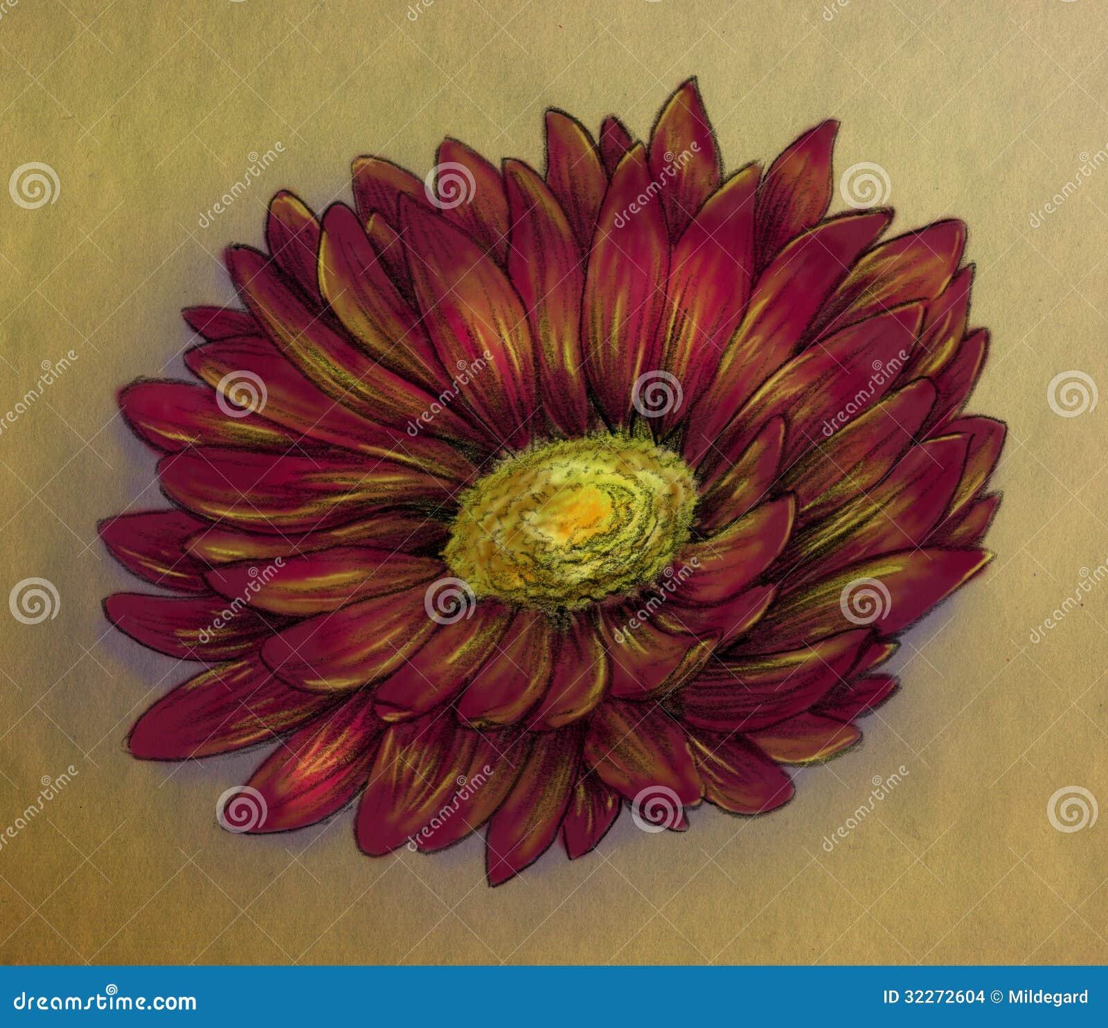 Daisy Flower Pencil Sketch Stock Photography | CartoonDealer.com ...