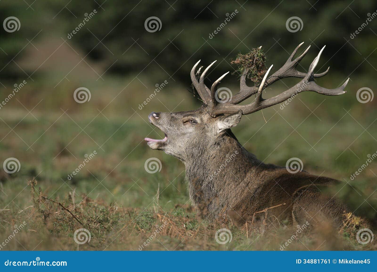 deer park single women Deer park texas, will update later get the pof mobile apps.