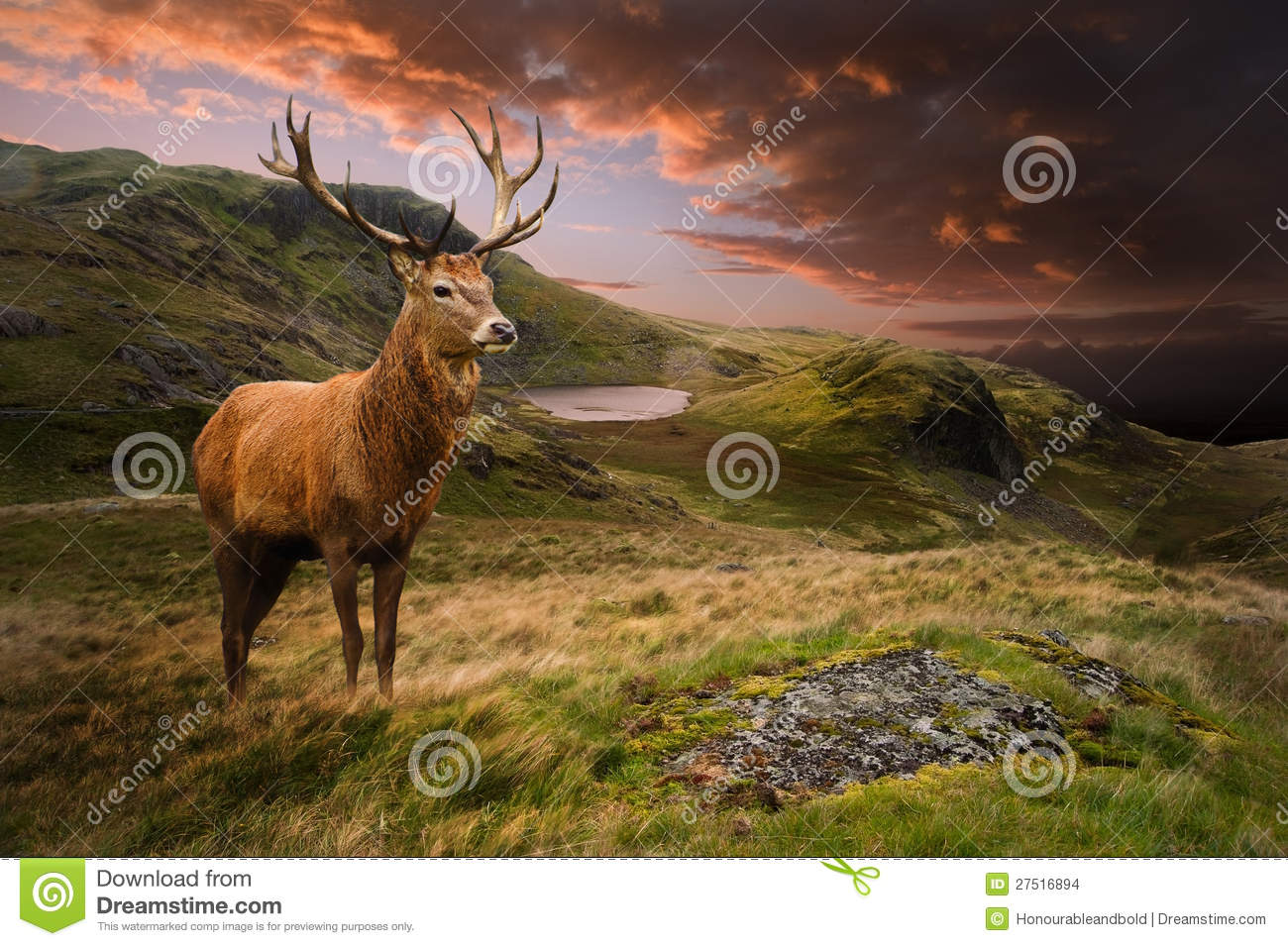 Landscaping Ties Red Deer : Red deer stag in dramatic mountain landscape stock images image