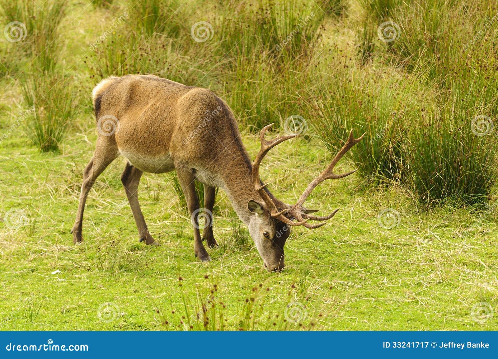 Dating online red deer