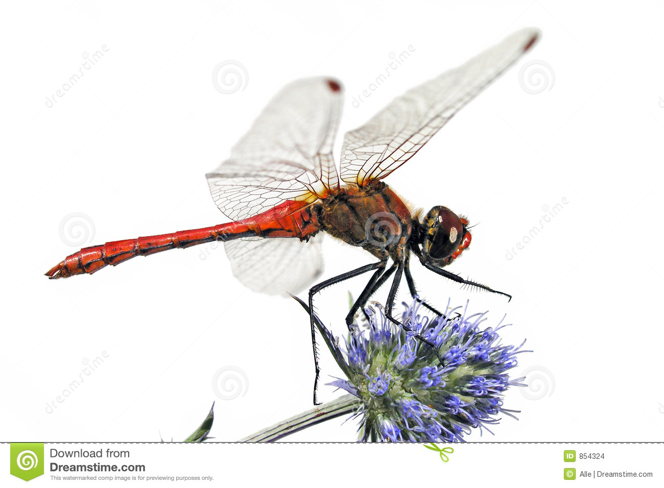 Red Dragonfly Stock Images - Image: 854324