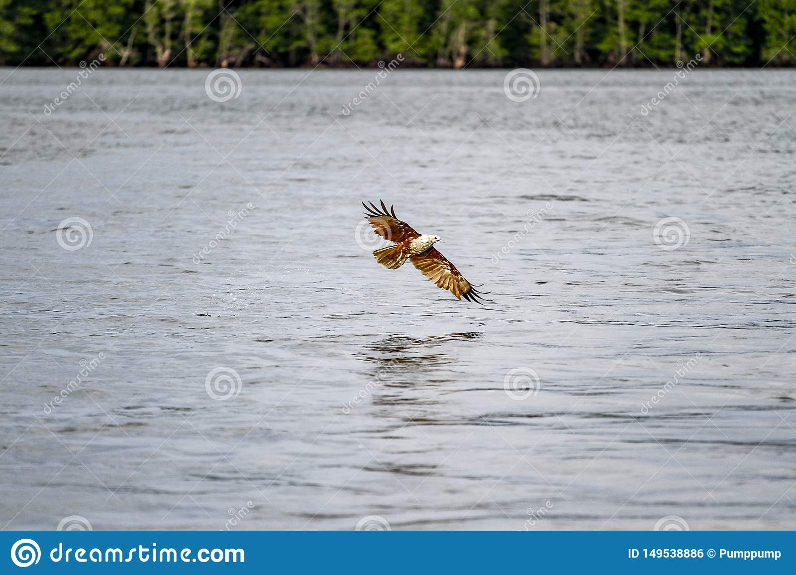 Red eagle on the sea in nature at thailand