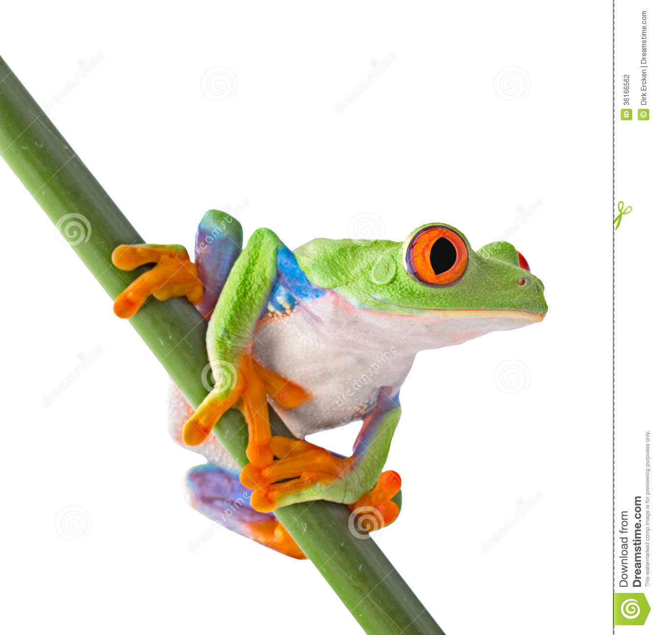 Amphibian Clipart | Wallpapers Gallery
