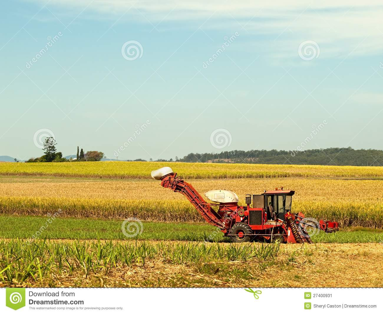 Red Farm Cane Harvester On Agriculture Land Stock Image