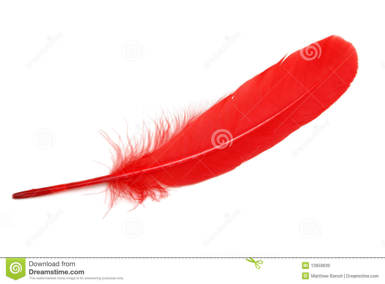 Red Feather Royalty Free Stock Images