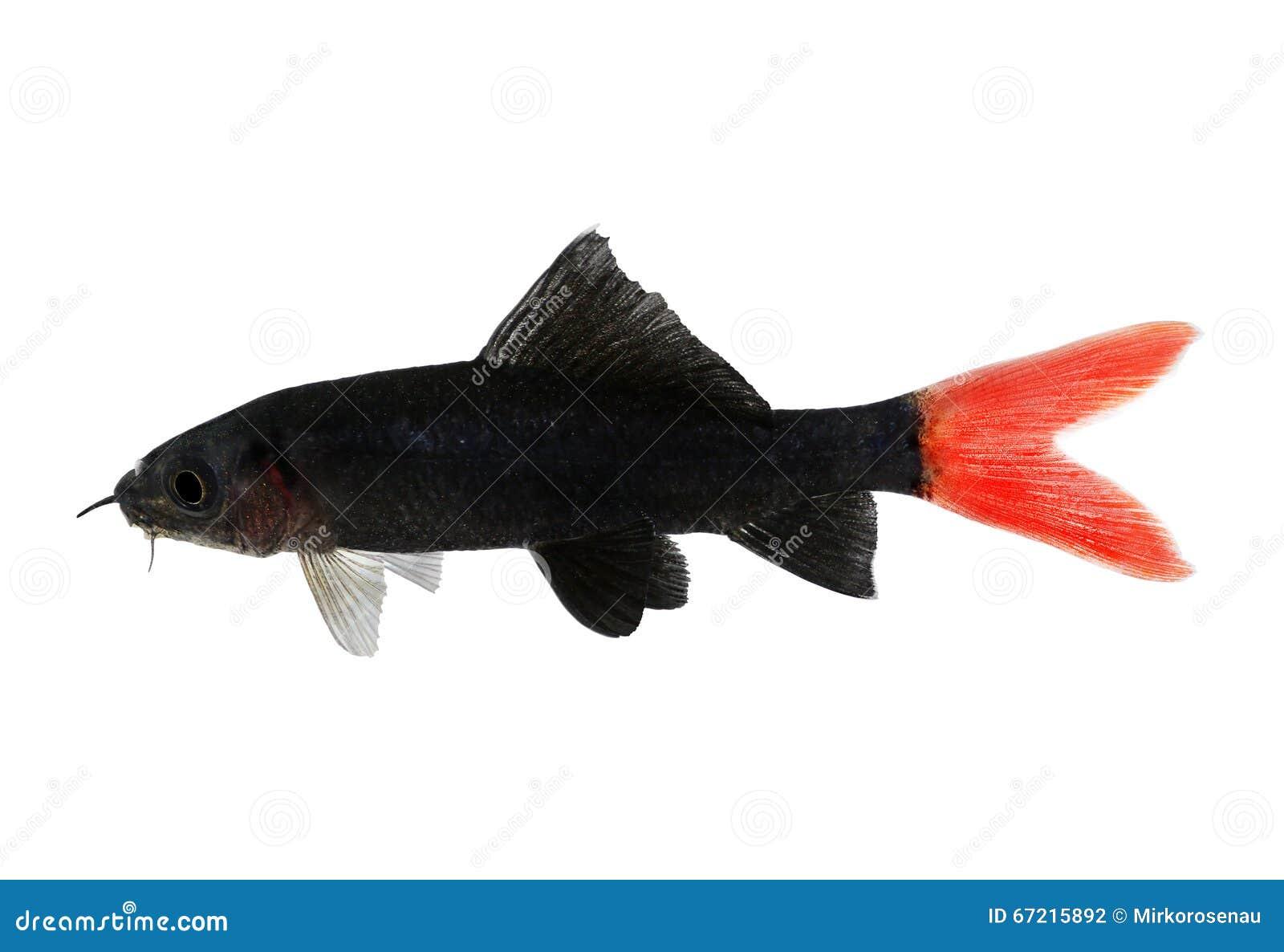 Catfish isolated cartoon vector 54631453 for Aquarium poisson rouge eau