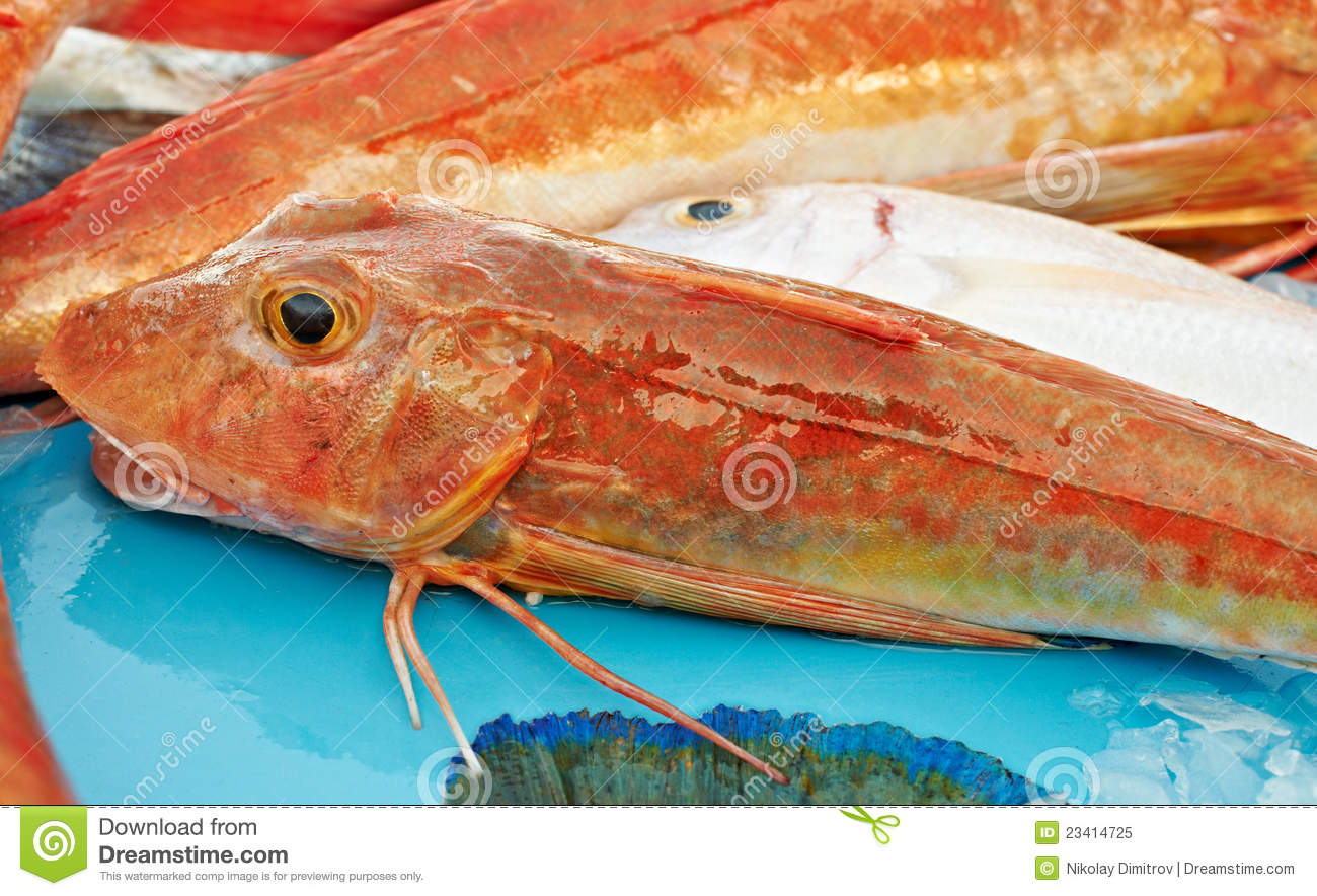 Red fish for sale royalty free stock photo image 23414725 for Stock fish for sale