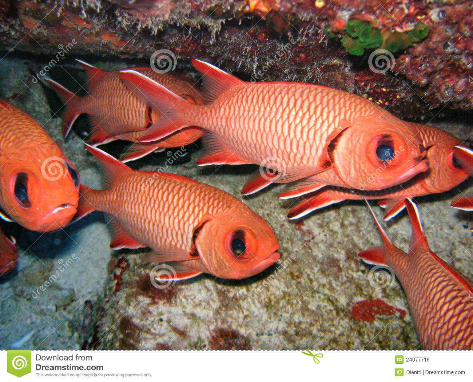 Red Fish School stock illustration. Illustration of fish - 12012062