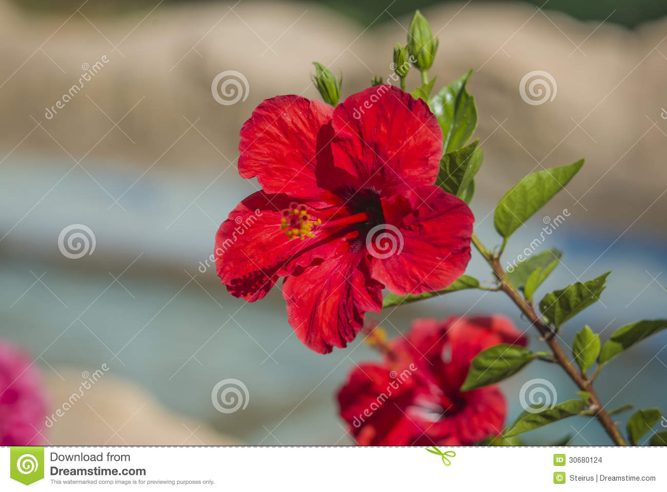 Red flower stock photo image of beauty decoration head 30680124 royalty free stock photo izmirmasajfo Images