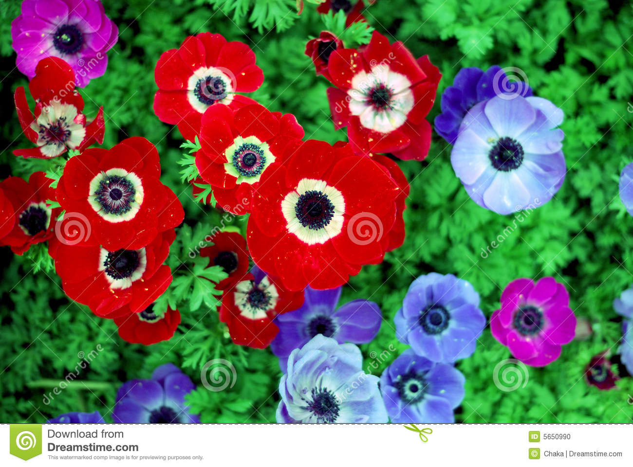 aed7e4ff3ece Red flower and blue flower stock photo. Image of plants - 5650990