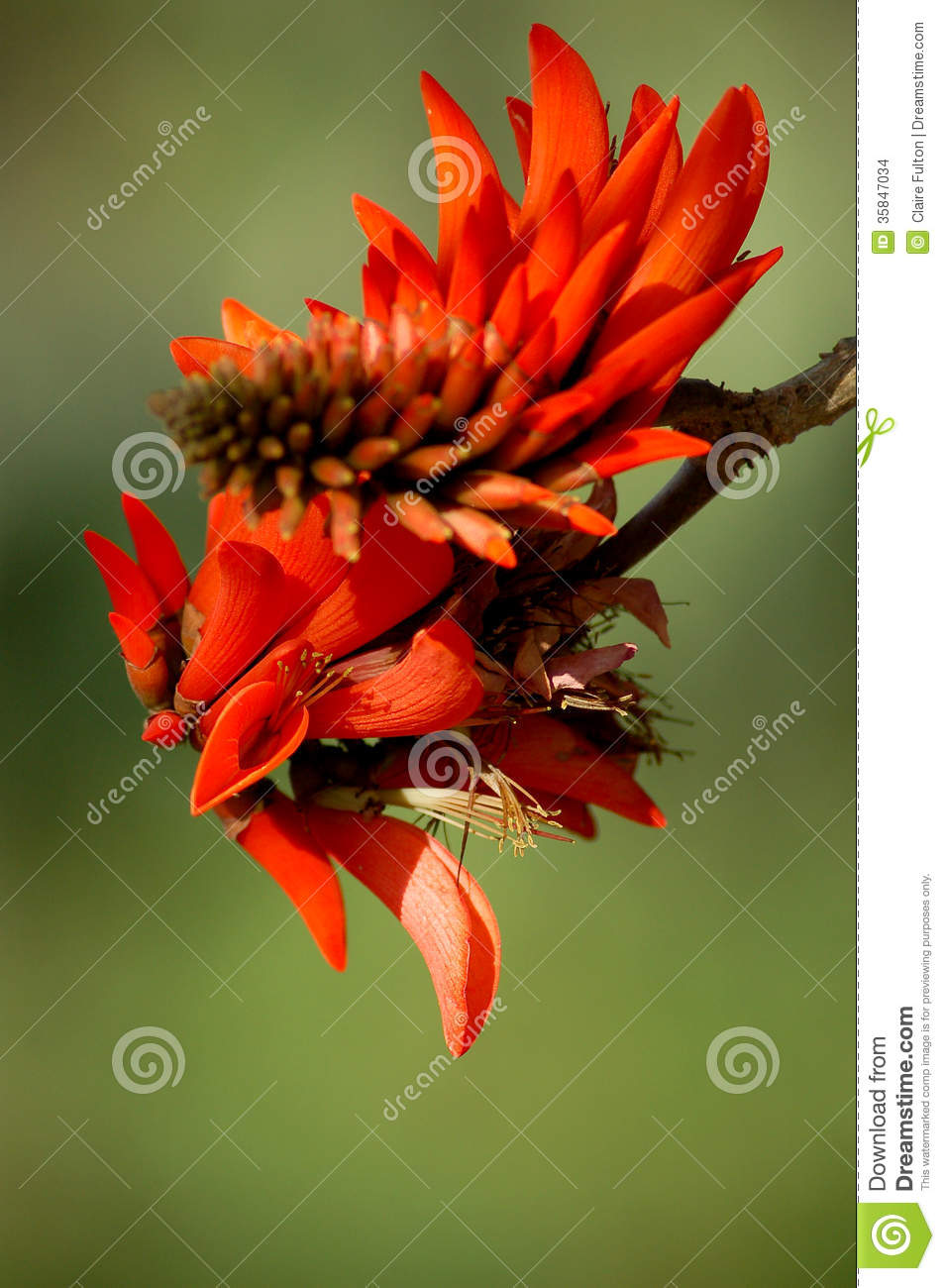 how to kill a coral tree