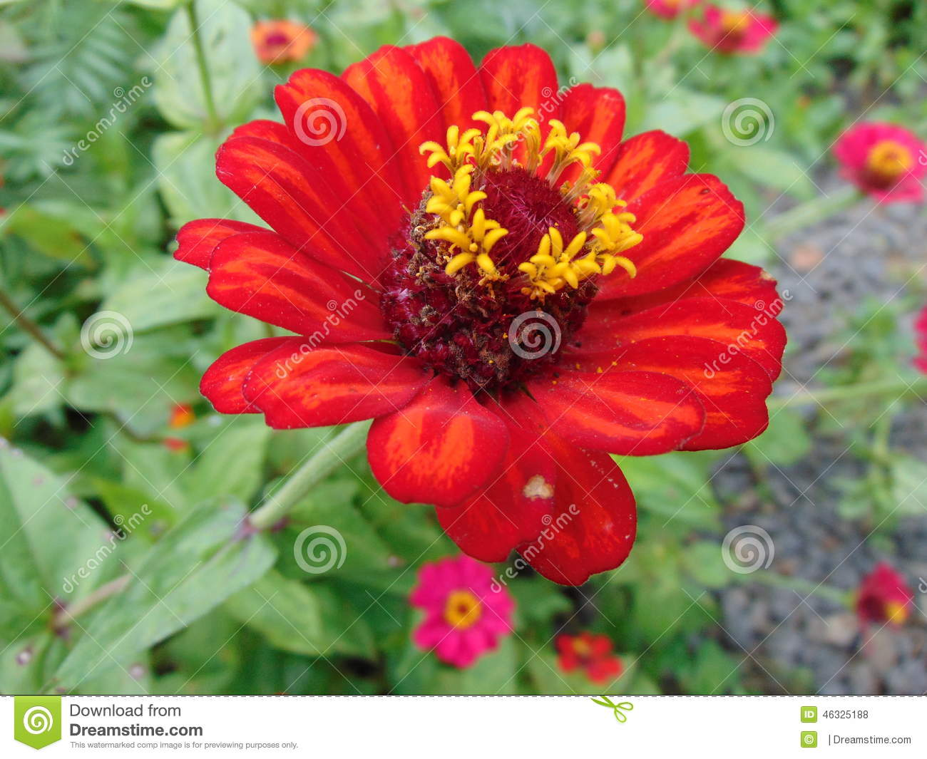 red flower exotic stock photo  image, Natural flower