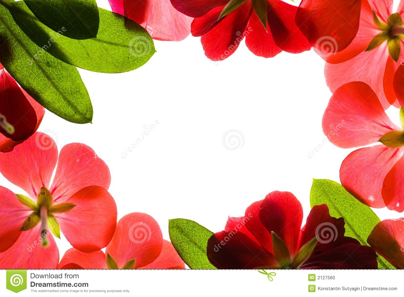 red flower frame stock photo image of flower botanical