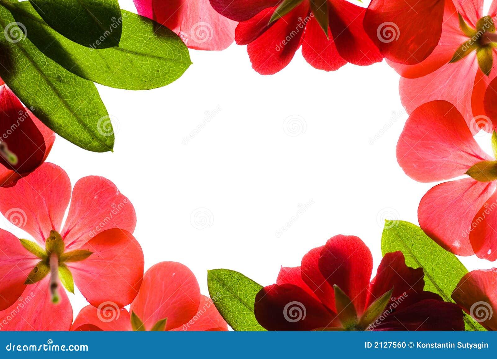Red Flower Frame Stock Photo