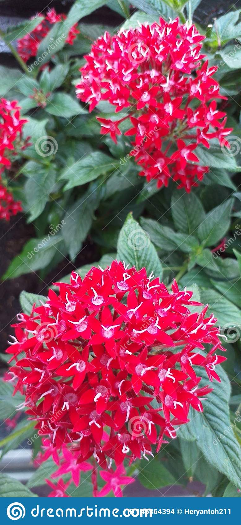 A Red flower with fresh leaves