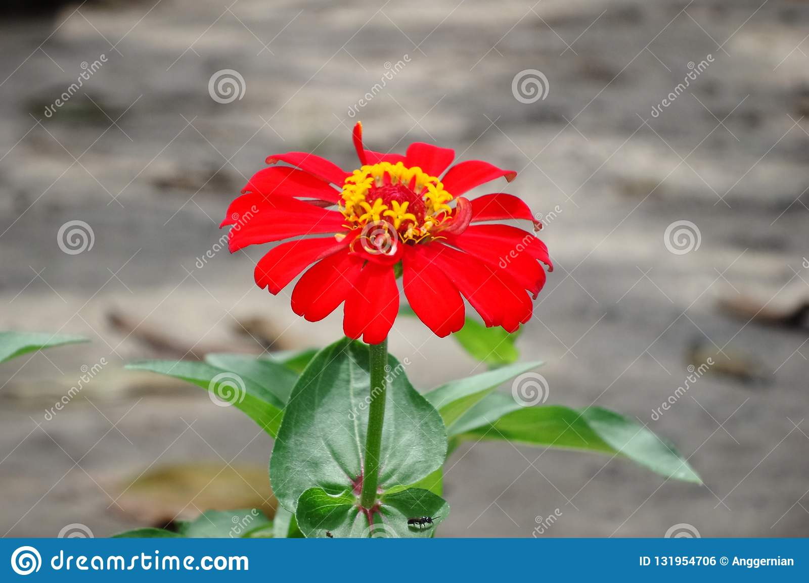 Red Flower On The Green Leaves Hd Wallpaper Background Stock Photo