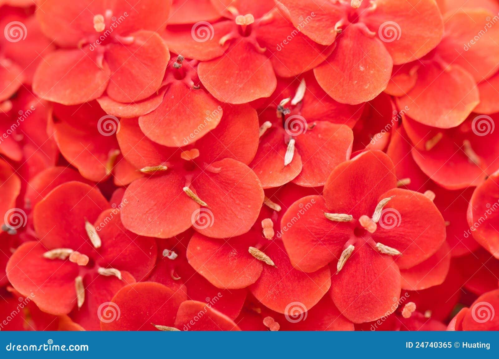 Flower Petal Texture