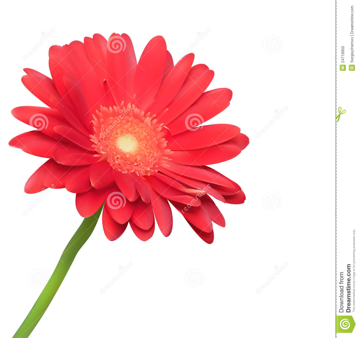 Red Flower On White Background Stock Vector Illustration Of Flora