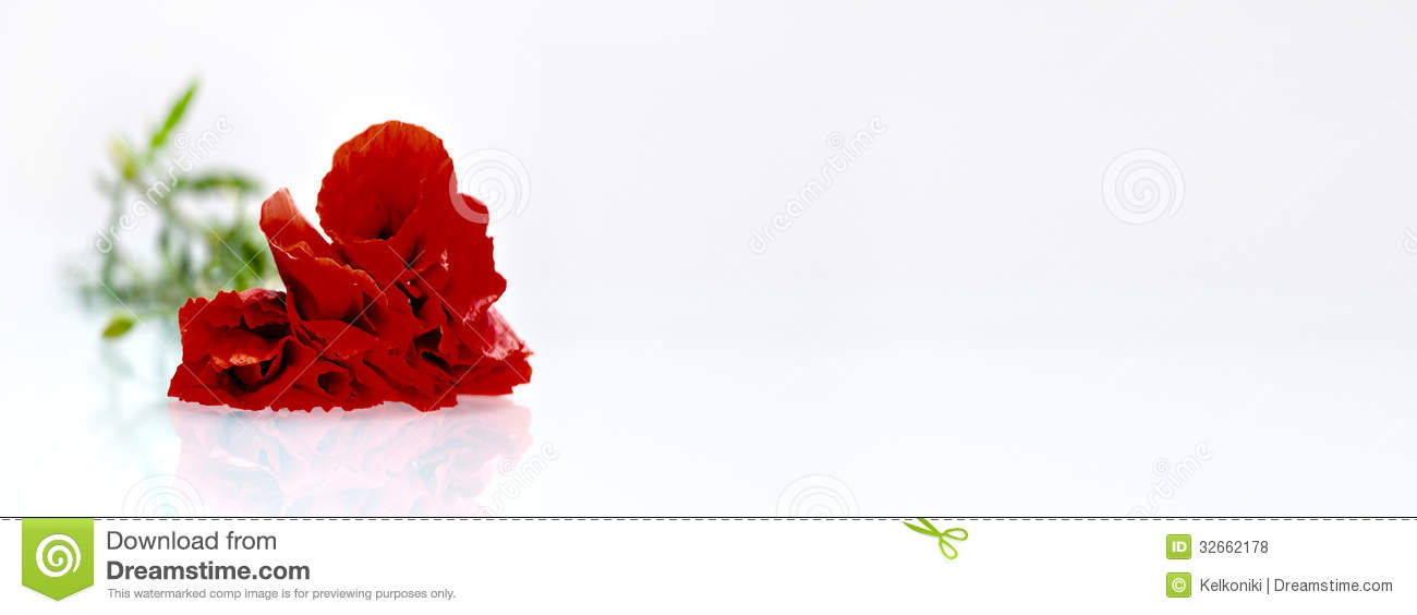 Red Flower Before White Background Stock Photo Image Of Active