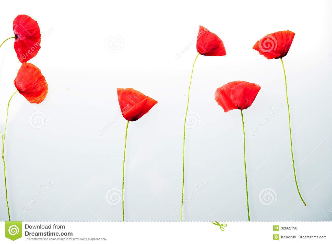 Red Flower Before White Background Stock Photo Image Of Ridden