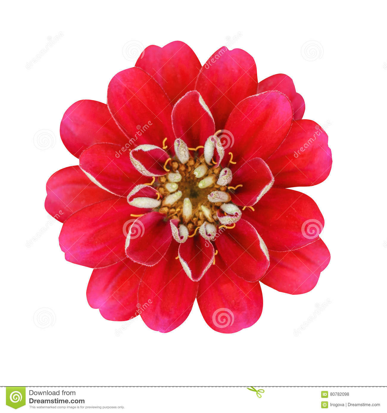 The red flower with yellow stamens stock photo image of fragrant download the red flower with yellow stamens stock photo image of fragrant elegant mightylinksfo