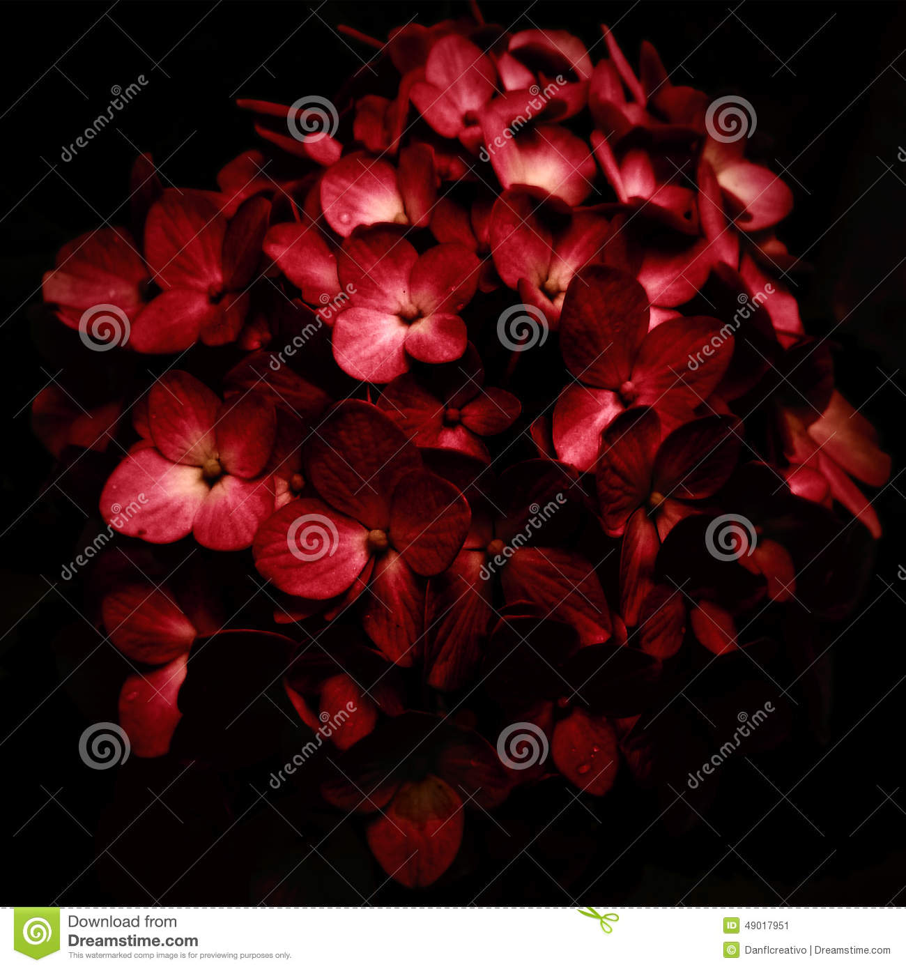 Red Flowers Bouquet In Black Background Stock Image ...