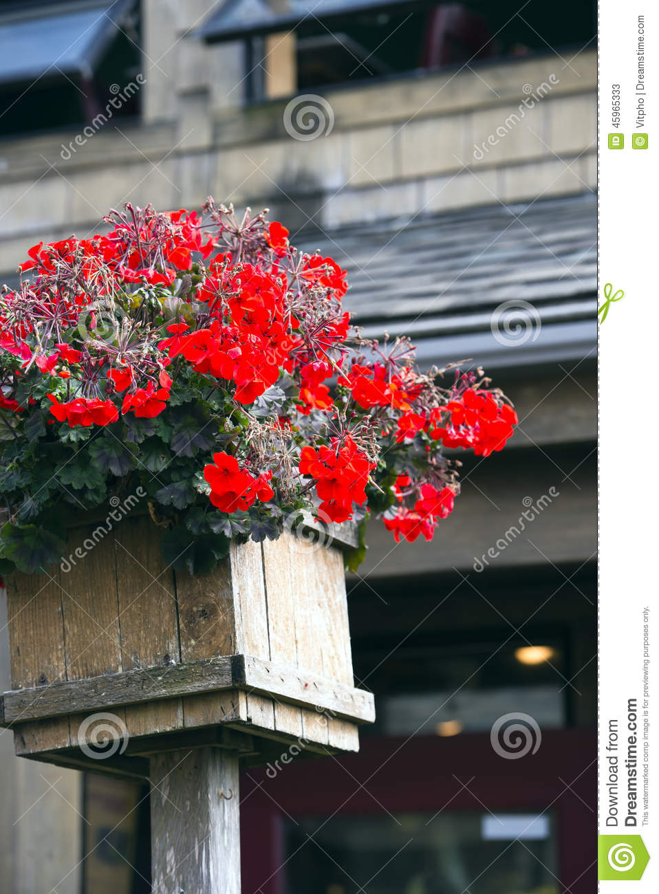 Geraniums in a wooden flower pot traditional rural romanian house porch royalty free stock - Care geraniums flourishing balcony porch ...