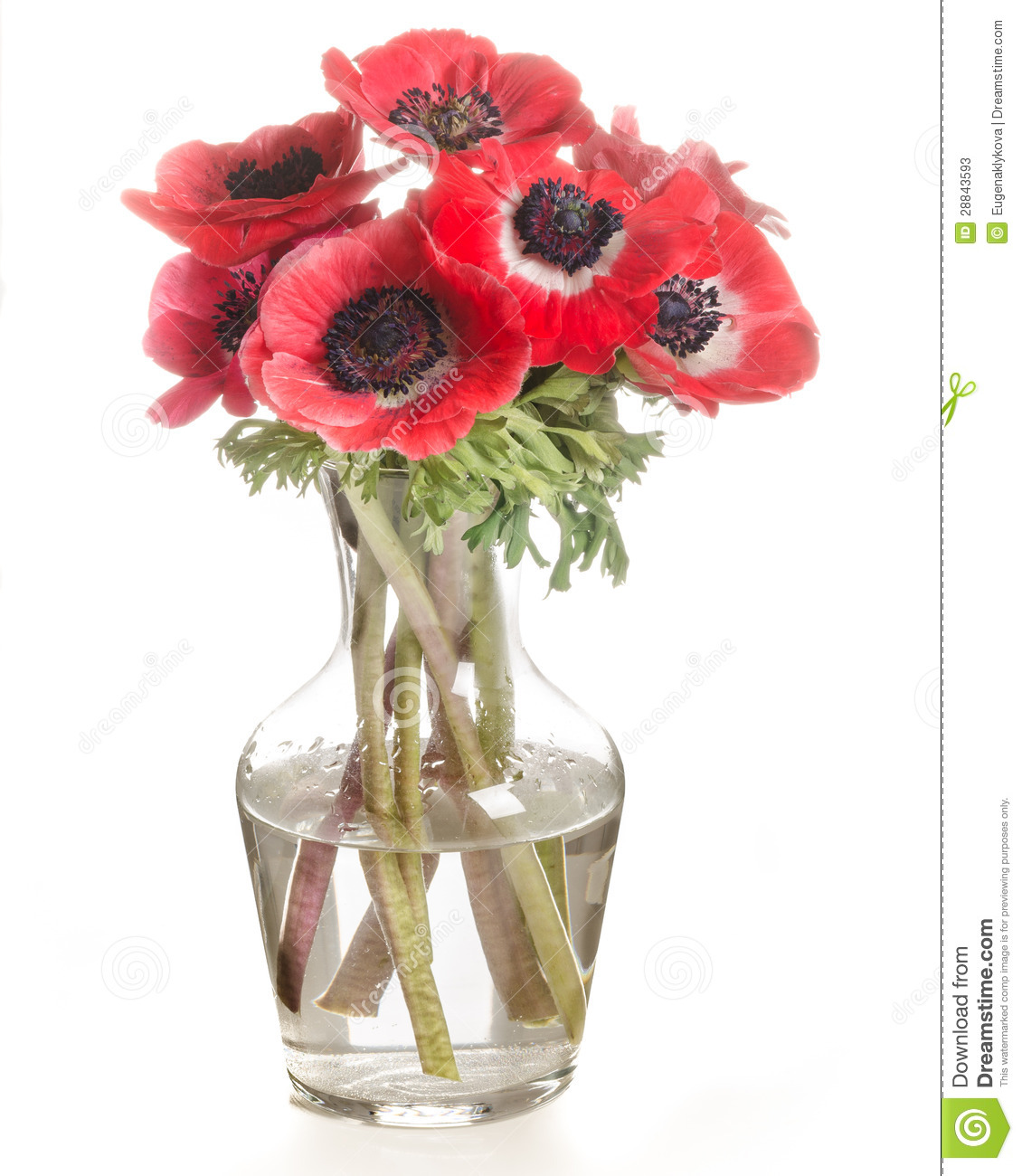 Red flowers in a glass vase isolated on white stock image image red flowers in a glass vase isolated on white reviewsmspy