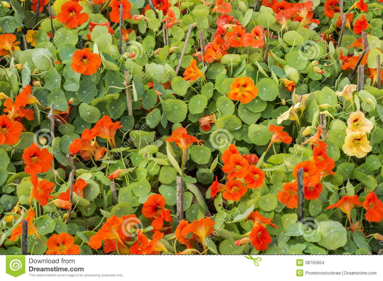 Red flowers and green leaves stock images image 38755954 for Green plants for flower beds