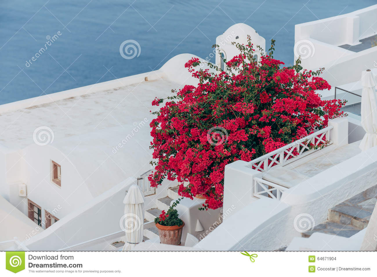 93505aac5382 Red flowers in Santorini stock photo. Image of thira - 64671904