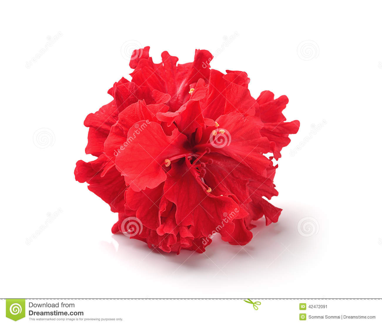 red flower on white - photo #12