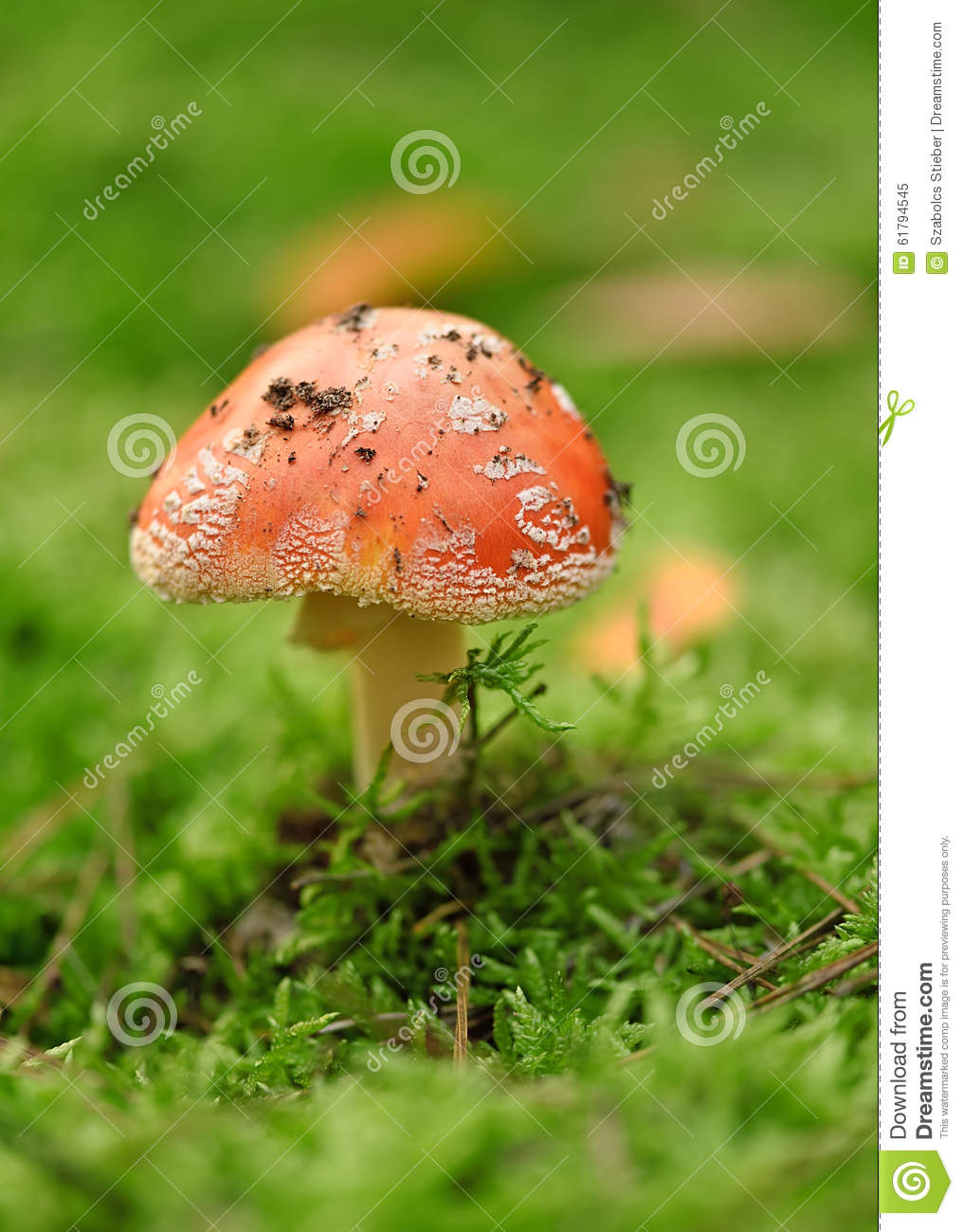 Macro Photo Of Moss In The Forest Stock Photography