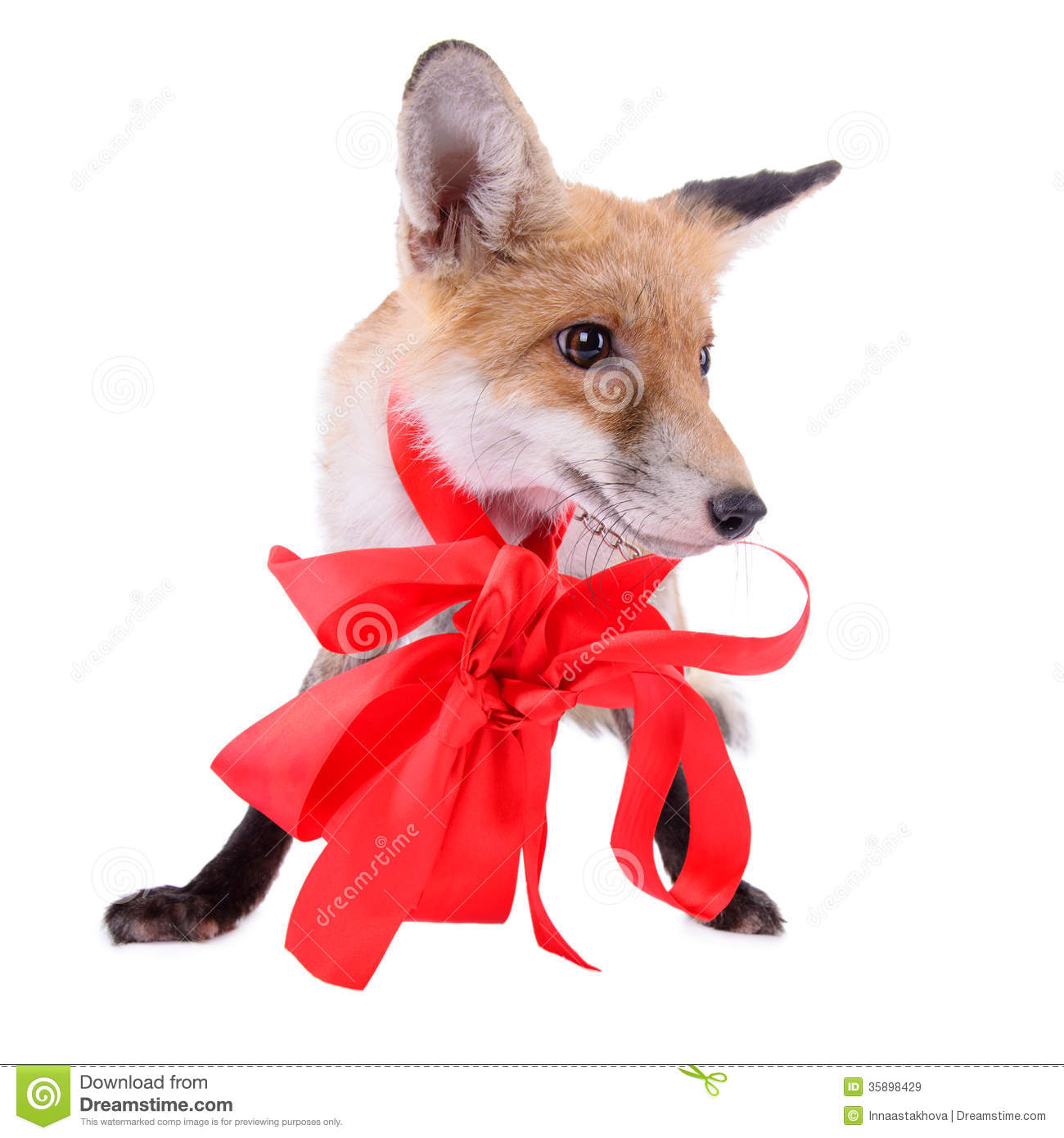 Fox with a hat new year or christmas animal isolated on white - Animal Bow Christmas Fox Isolated New Red White Year