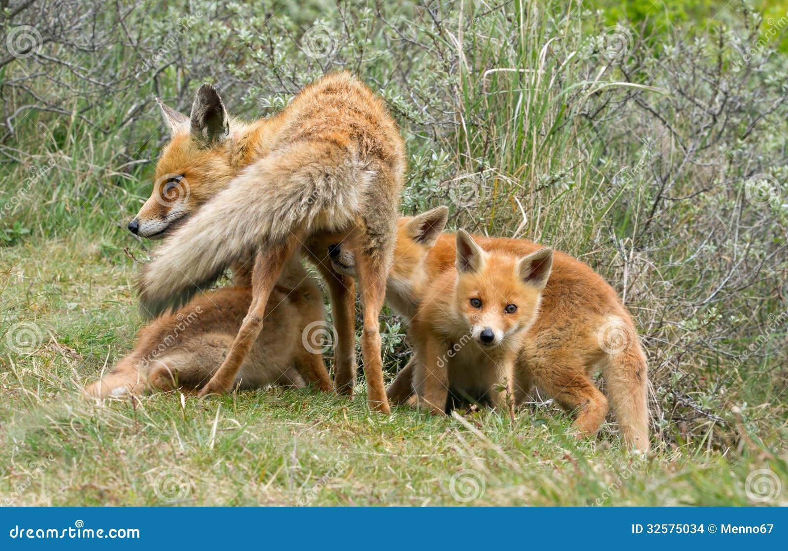 red fox cub stock images image 32575034 Artic Animals Arctic Animals Clip Art Black and White