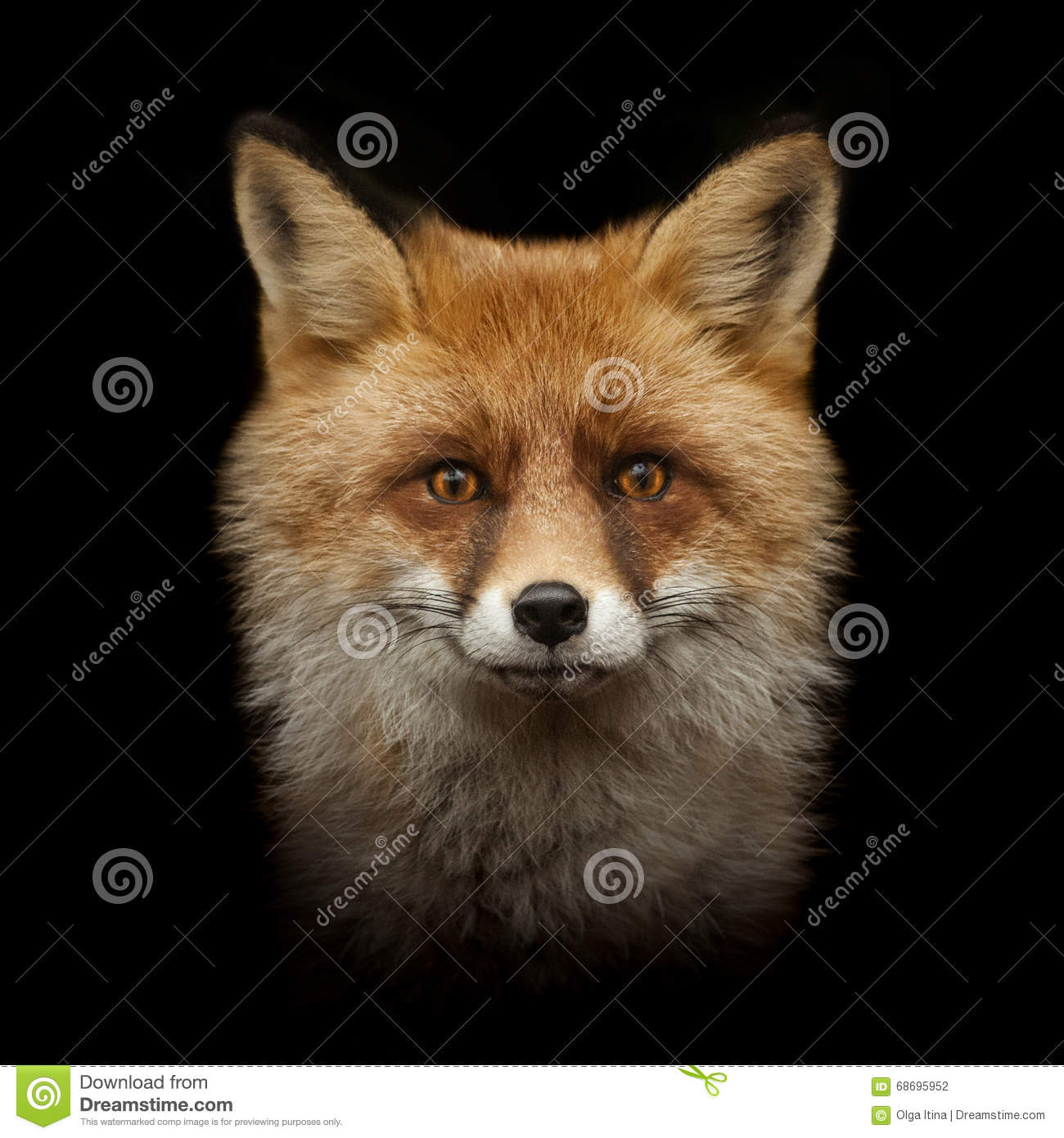 red fox face and - photo #44