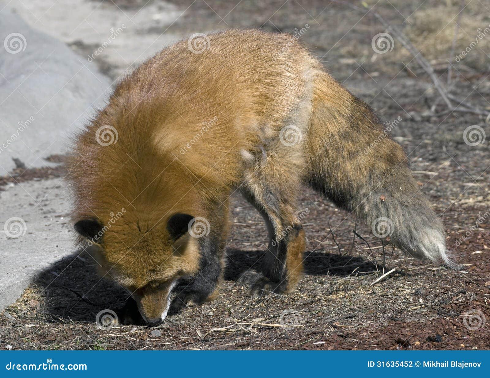 fox latina - photo#36