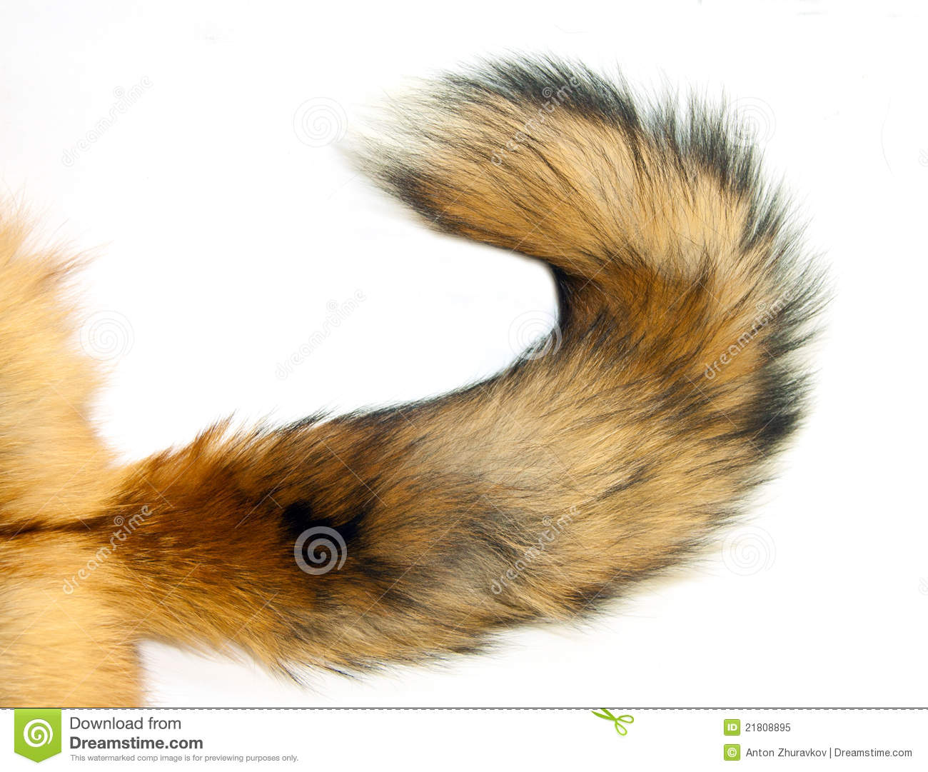 Red Fox Tail Royalty Free Stock Photo - Image: 21808895
