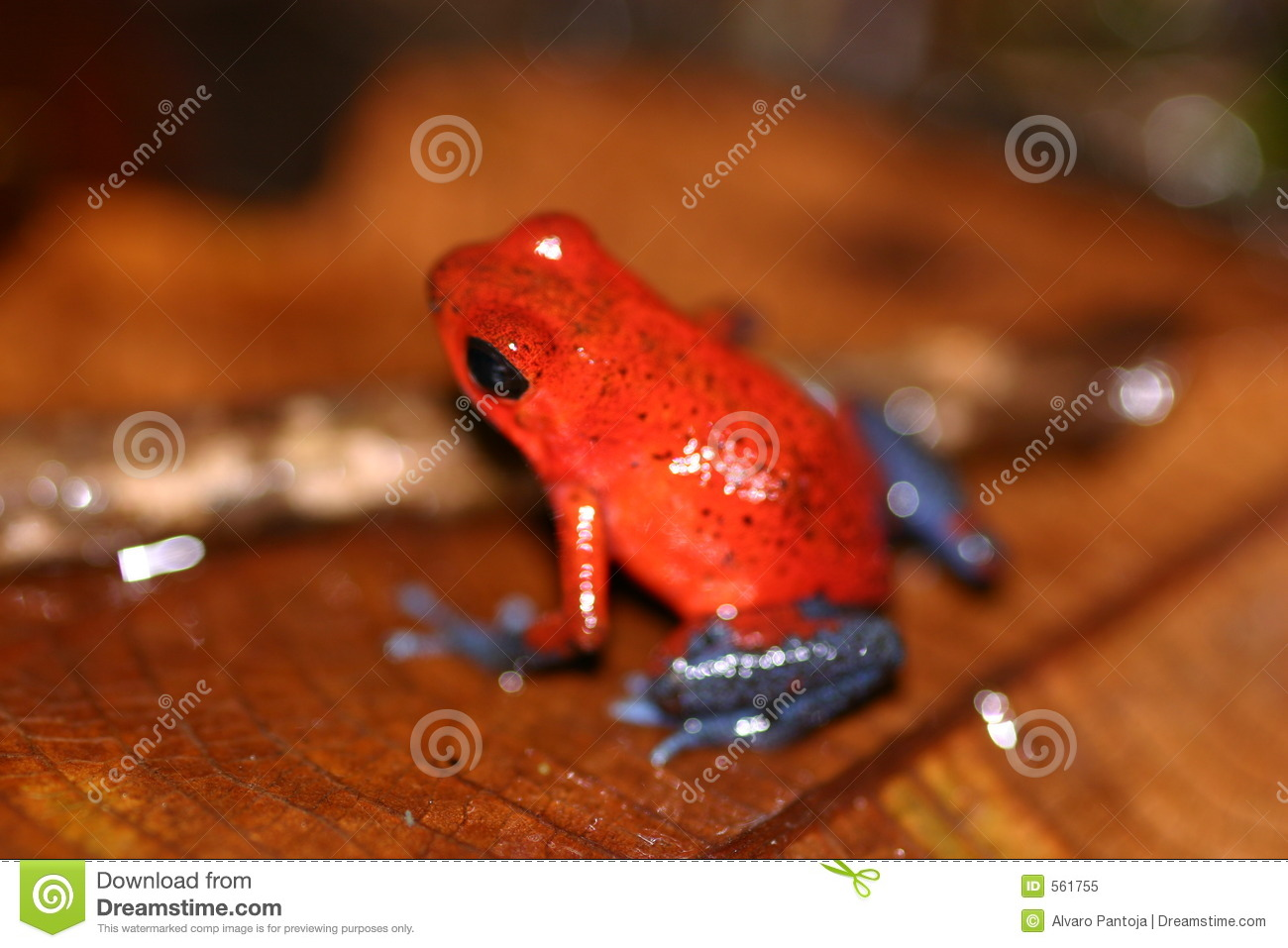 30 Red Frog jobs available on rburbeltoddrick.ga Apply to Biologist, Monitor, Manufacturer's Representative and more!