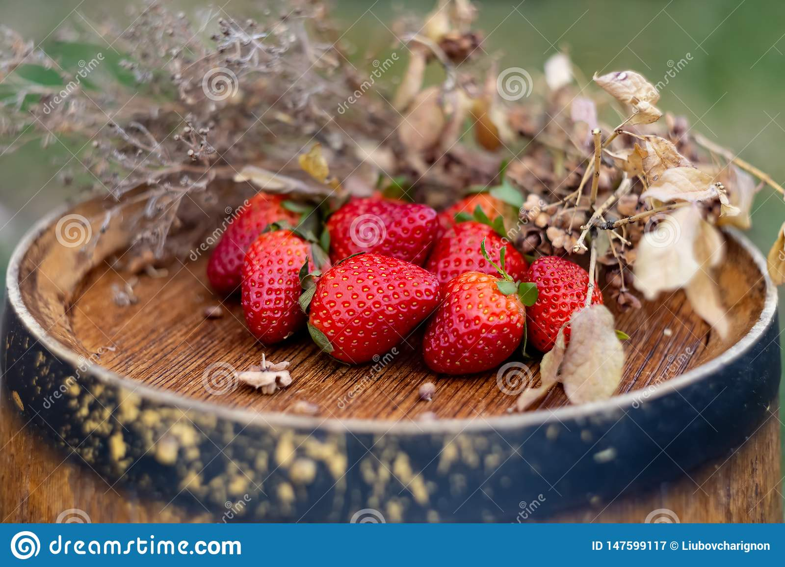 Red fruits or berries and dry grass on a wooden surface in the garden