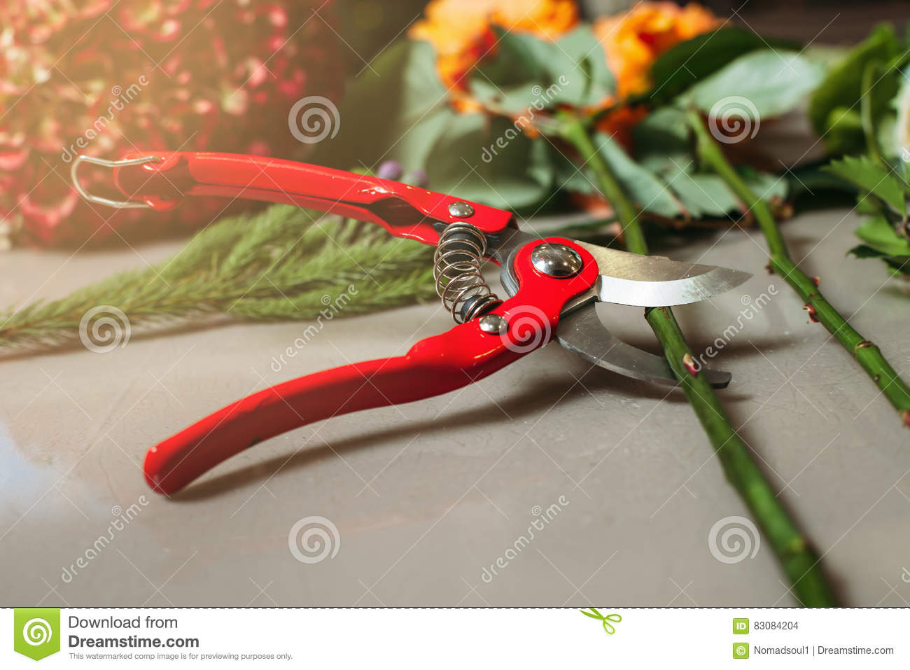 red garden scissors cutting rose. stock photo - image: 83084204